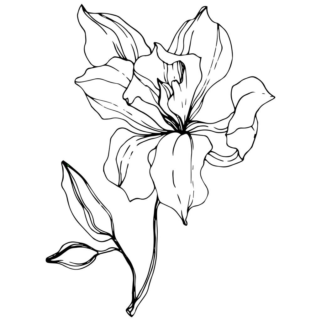 Beautiful orchid flower. Black and white engraved ink art. Isolated orchid illustration element on white background.