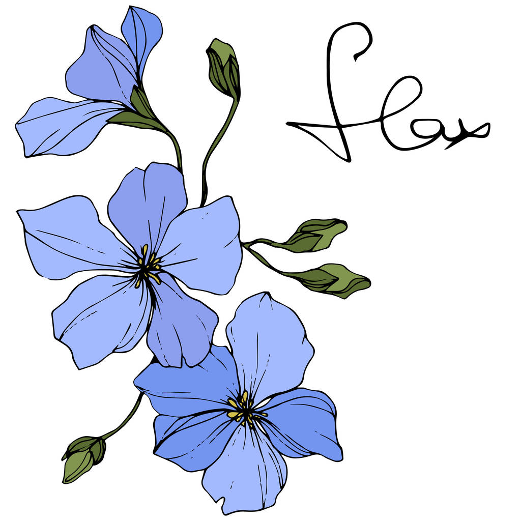 Beautiful blue flax flowers with green leaves isolated on white. Engraved ink art.