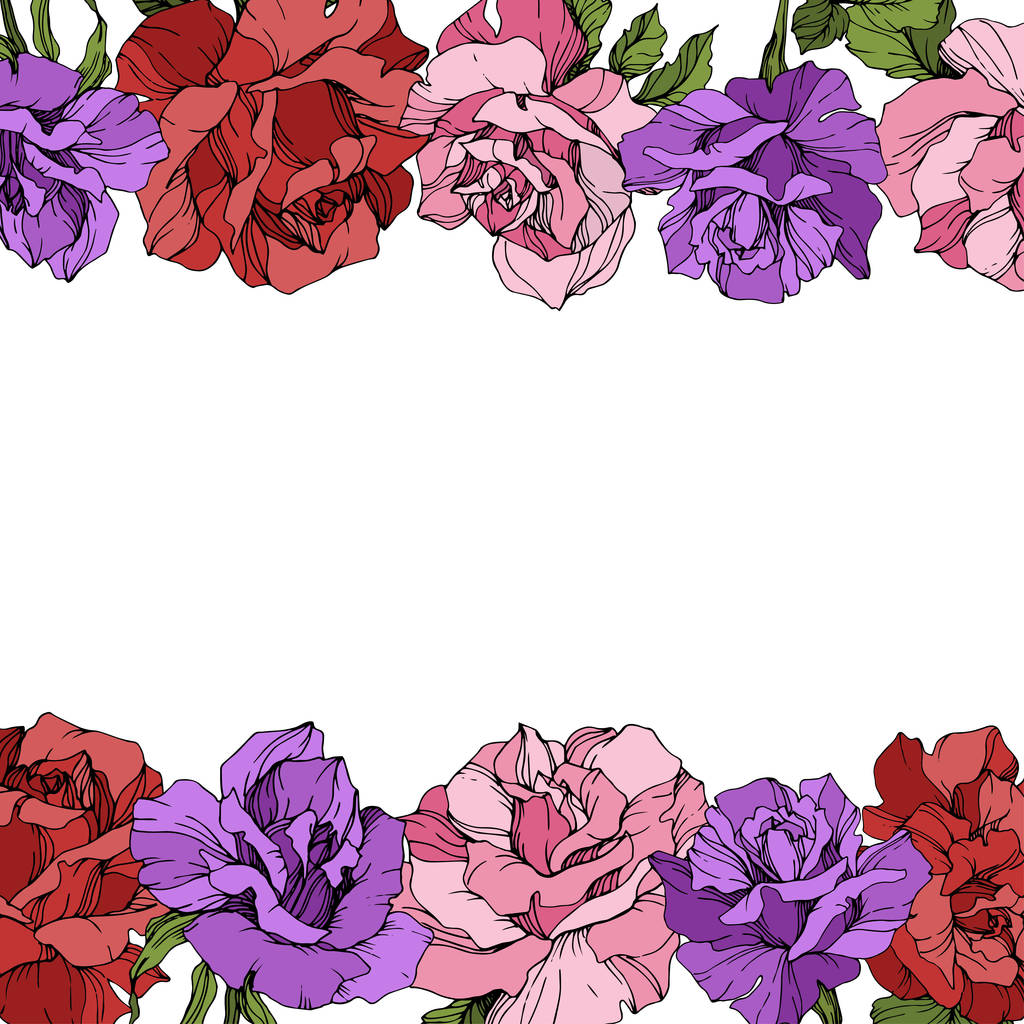 Vector. Rose flowers floral borders on white background. Red, purple and pink roses engraved ink art.