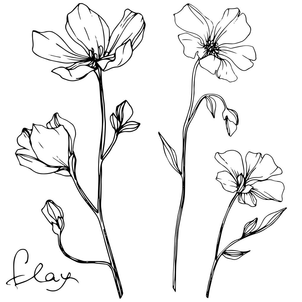 Vector Flax floral botanical flower. Wild spring leaf wildflower isolated. Black and white engraved ink art. Isolated flax illustration element on white background.