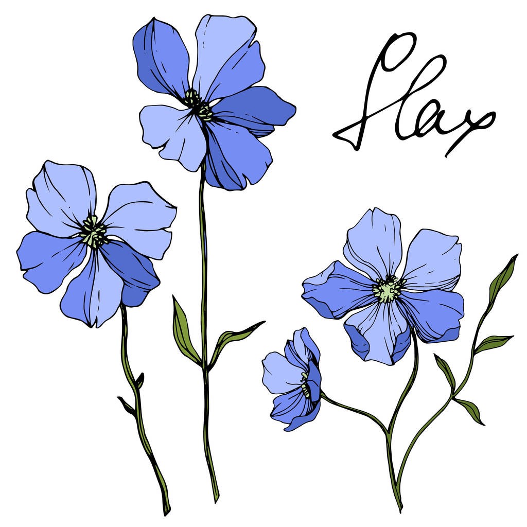 Vector Blue Flax floral botanical flower. Wild spring leaf wildflower isolated. Engraved ink art. Isolated flax illustration element on white background.