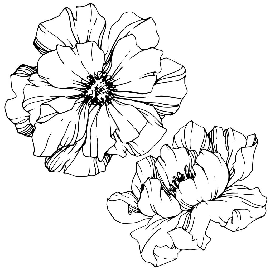 Vector Peony floral botanical flower. Wild spring leaf wildflower isolated. Black and white engraved ink art. Isolated peony illustration element.