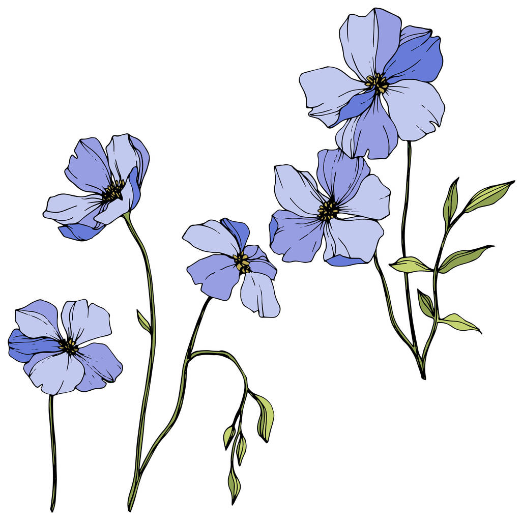 Vector Blue flax. Floral botanical flower. Wild spring leaf wildflower isolated. Engraved ink art. Isolated flax illustration element.