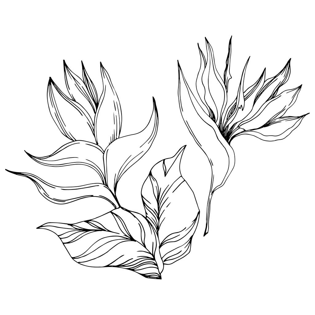 Vector Exotic tropical hawaiian summer. Palm beach tree leaves jungle botanical flowers. Black and white engraved ink art. Isolated flower illustration element.