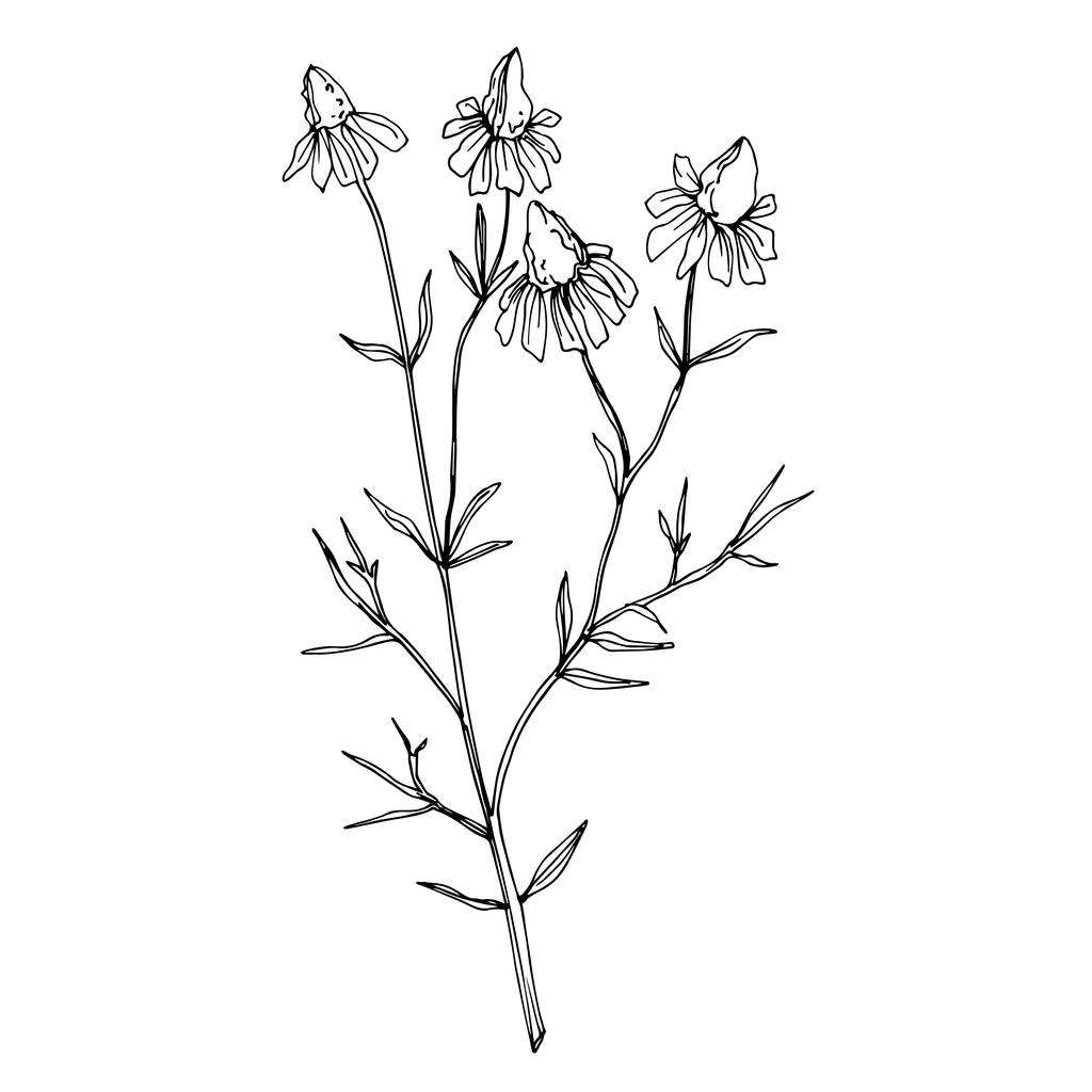 Vector Wildflowers floral botanical flowers. Wild spring leaf wildflower isolated. Black and white engraved ink art. Isolated flower illustration element on white background.