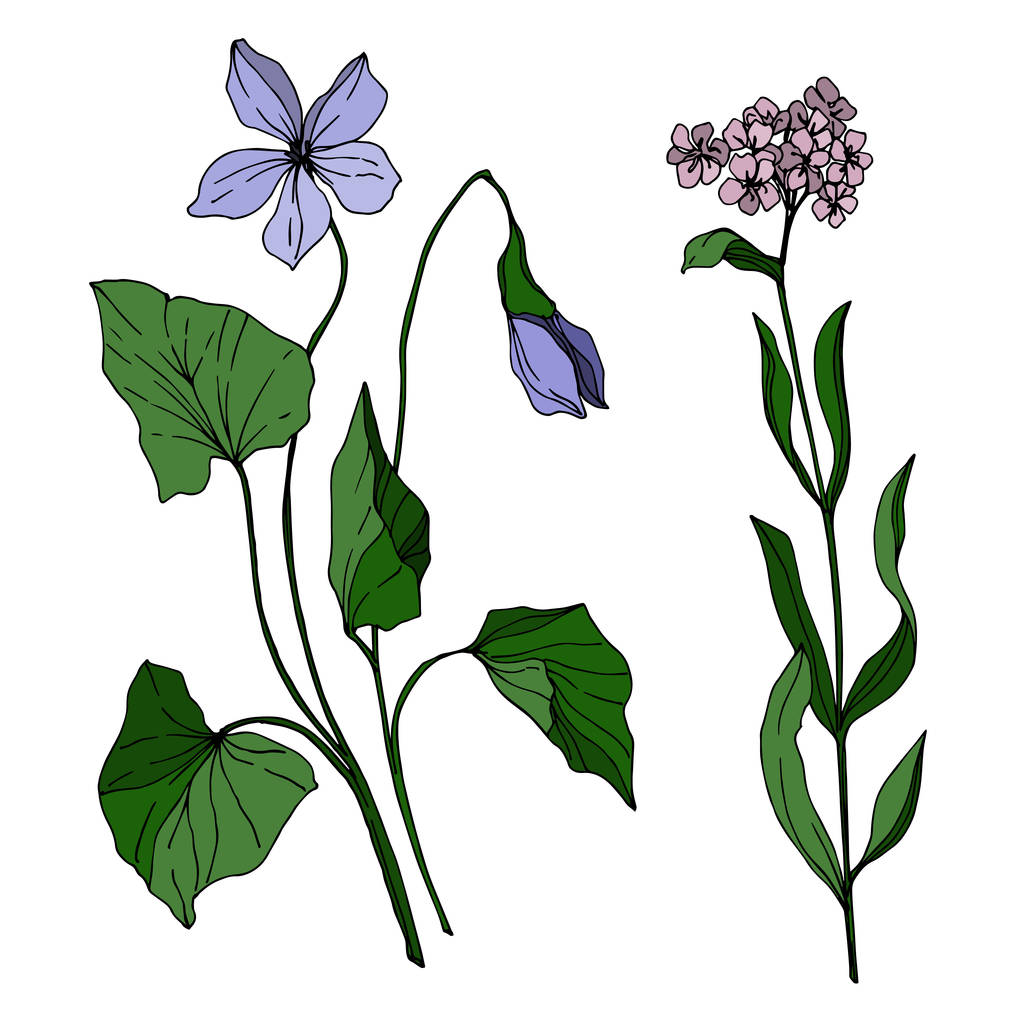 Vector wildflower floral botanical flowers. Wild spring leaf wildflower isolated. Black and white engraved ink art. Isolated wildflowers illustration element.