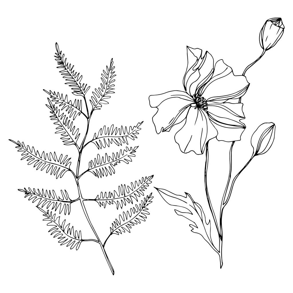 Vector Wildflowers floral botanical flowers. Wild spring leaf wildflower isolated. Black and white engraved ink art. Isolated flowers illustration element.
