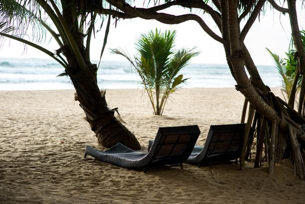 sunbeds under tropical trees - Photo, Image