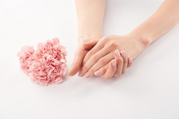 Partial view of female hands and carnations flowers on white background - Photo, Image