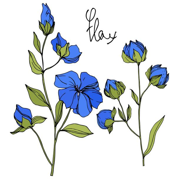 Vector Flax floral botanical flowers. Blue and green engraved ink art. Isolated flax illustration element. - Vector, Image