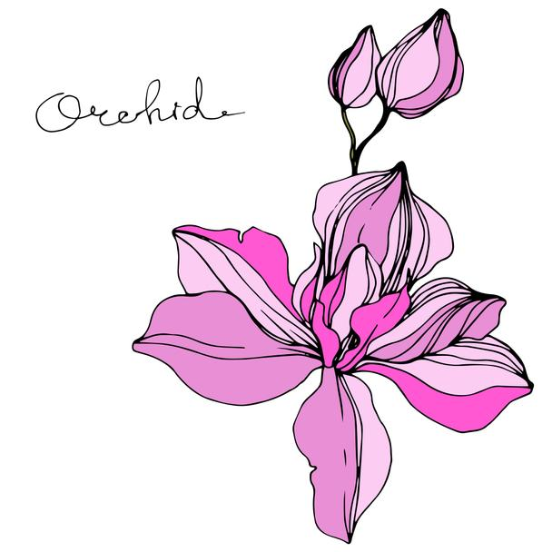 Vector Pink orchid. Floral botanical flower. Engraved ink art. Isolated orchid illustration element. - Vector, Image