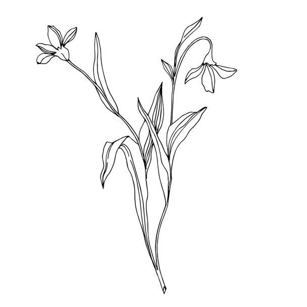 Vector Wildflower floral botanical flowers. Black and white engraved ink art. Isolated flower illustration element. - Vector, Image