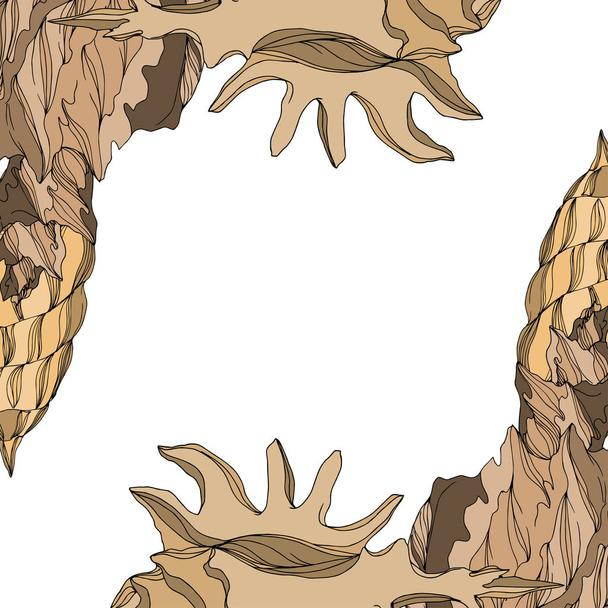 Vector Summer beach seashell tropical elements. Brown beige engr - Vector, Image