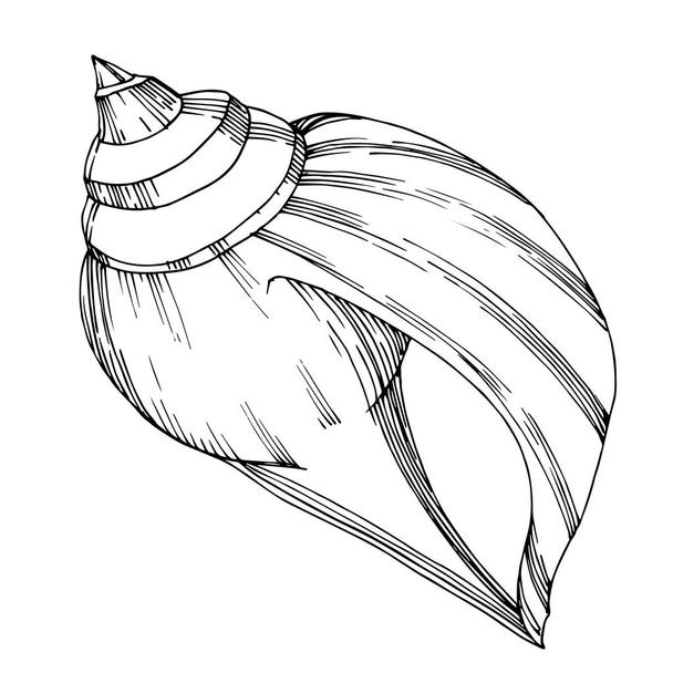 Vector Summer beach seashell tropical elements. Black and white  - Vector, Image