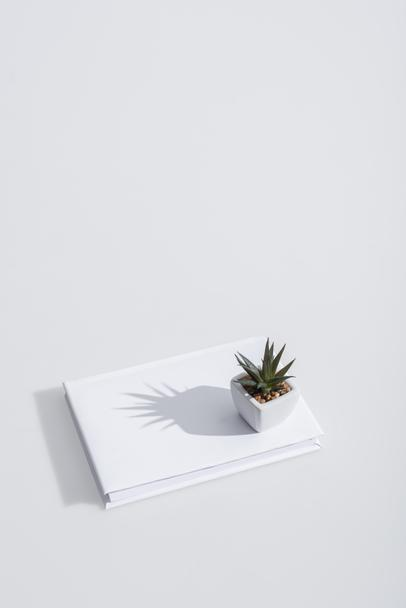 high angle view of green plant on book with hardcover on white - Photo, Image