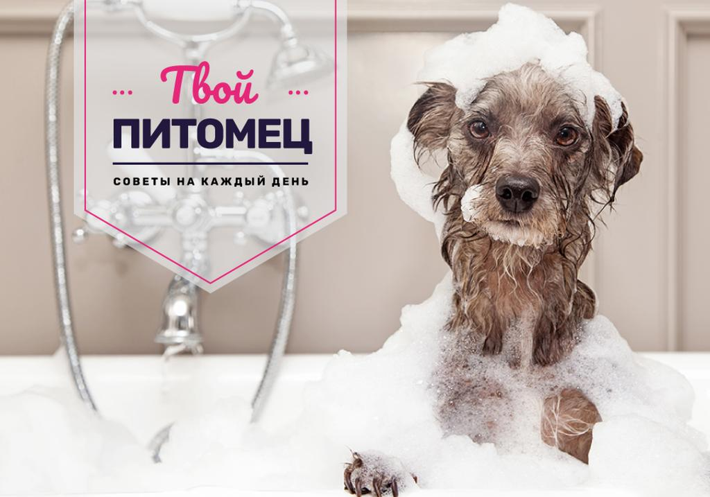 Washing Dog Tips Cute Puppy in Foam | VK Universal Post — Créer un visuel