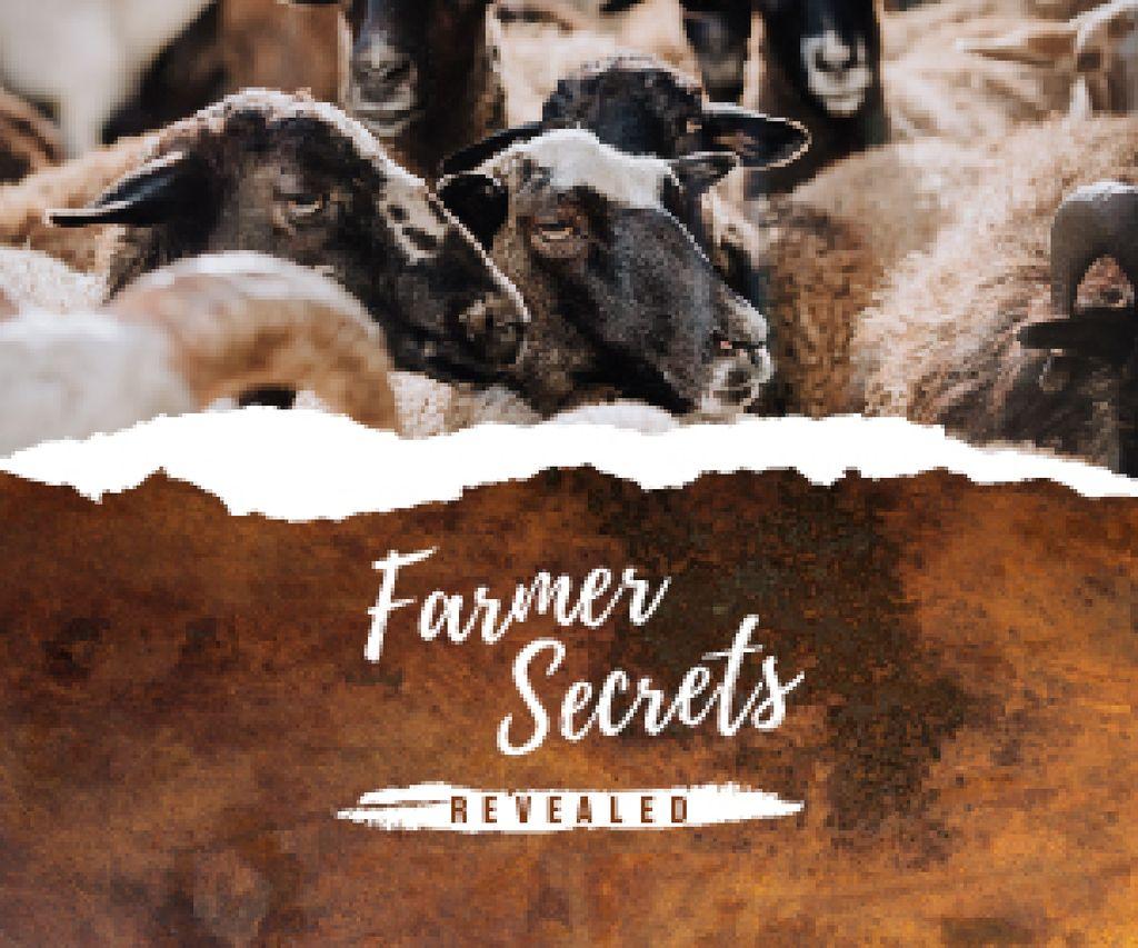 Farming Tips Cute Sheep Herd Medium Rectangle Modelo de Design