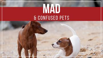 Mad and confused pets