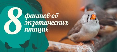 Ornithology Facts with Cute Finch Bird VK Post with Button – шаблон для дизайна