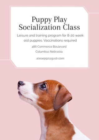 Puppy playing socialization class Posterデザインテンプレート
