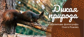 Wild Nature Photo Cute Squirrel on Tree | VK Post with Button Template