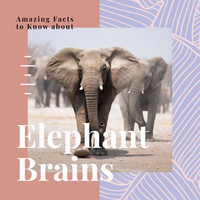 Modèle de visuel Wild elephants in natural habitat - Instagram