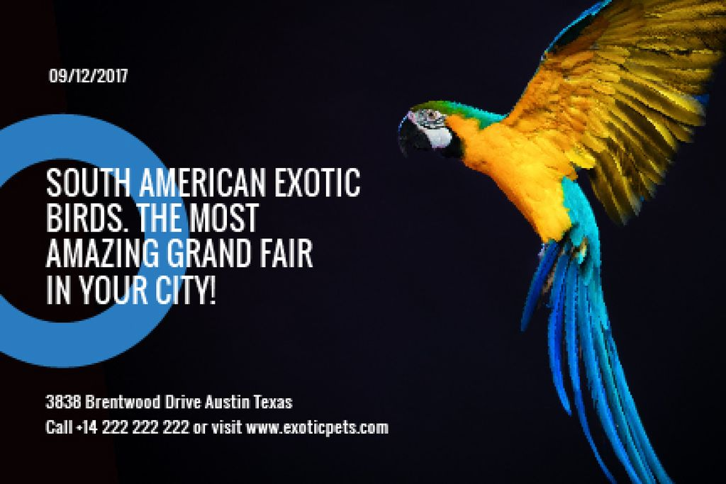 South American exotic birds fair — Створити дизайн