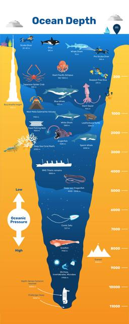 Education infographics about Ocean Depth Infographicデザインテンプレート