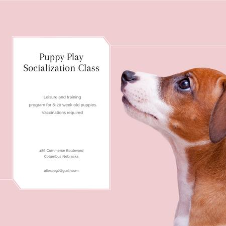 Template di design Puppy socialization class with Dog in pink Instagram AD