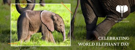Elephant Day Celebration with little elephant Facebook cover – шаблон для дизайну