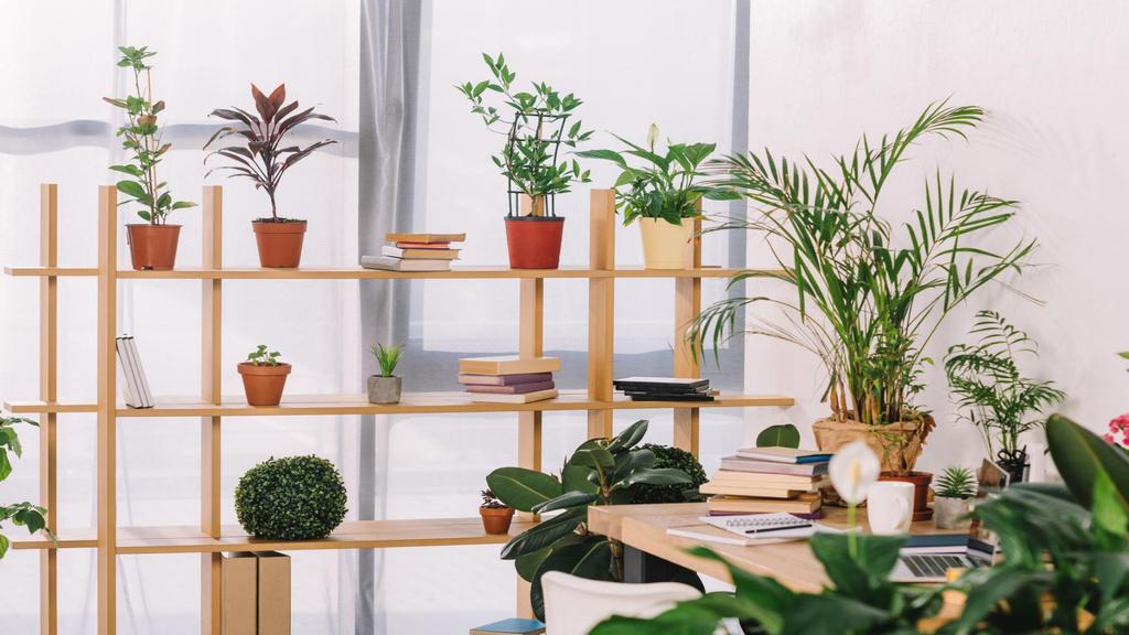 Plantilla de diseño de Wooden shelves with Flowers Zoom Background