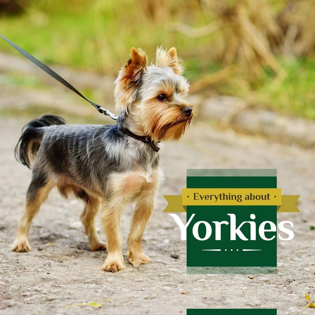 Adorable little Yorkshire Terrier  — ein Design erstellen