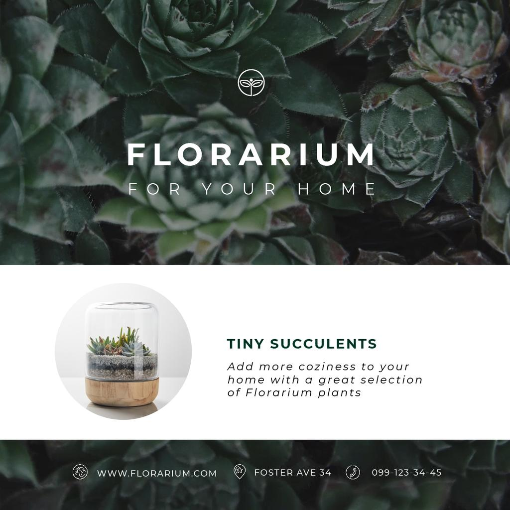 Floral Shop Ad with Succulent Plants in Green — Crea un design