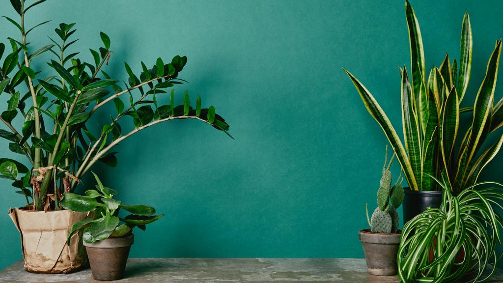 Potted Flowers near green Wall — Create a Design