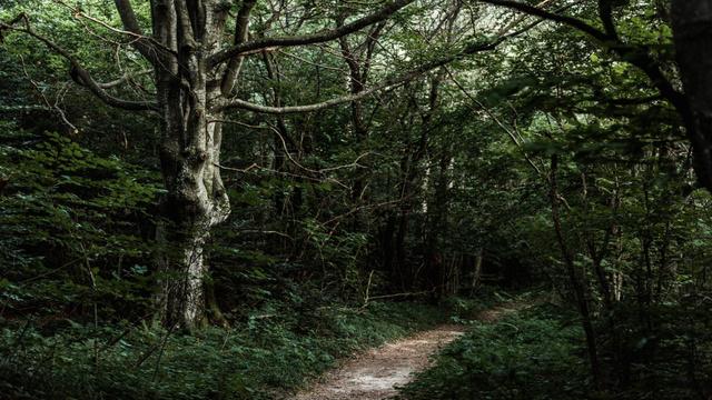 Plantilla de diseño de Footpath in the wild Forest Zoom Background
