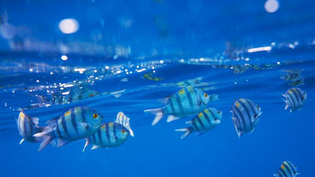 Striped Fish swimming Underwater Zoom Backgroundデザインテンプレート