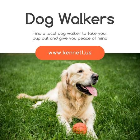 Plantilla de diseño de Dog Walking Services Golden Retriever on Grass Instagram