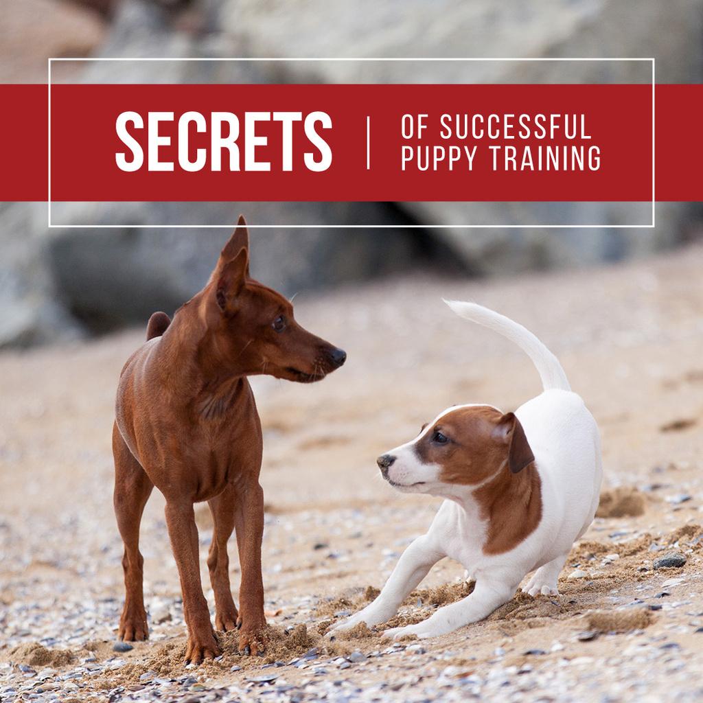 Secrets of puppy training with Cute Dogs — Crear un diseño