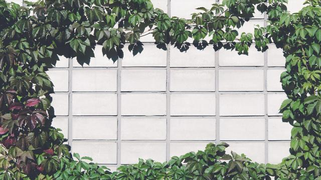 Brick Wall covered with beautiful Ivy Zoom Background – шаблон для дизайна