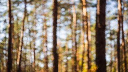 Unfocused view of Pine Forest Zoom Background Design Template