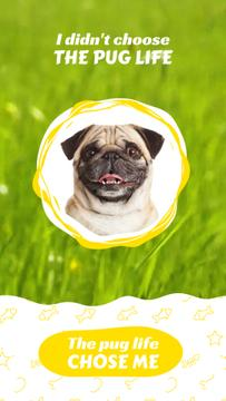 Funny Smiling Pug on Grass Background | Vertical Video Template