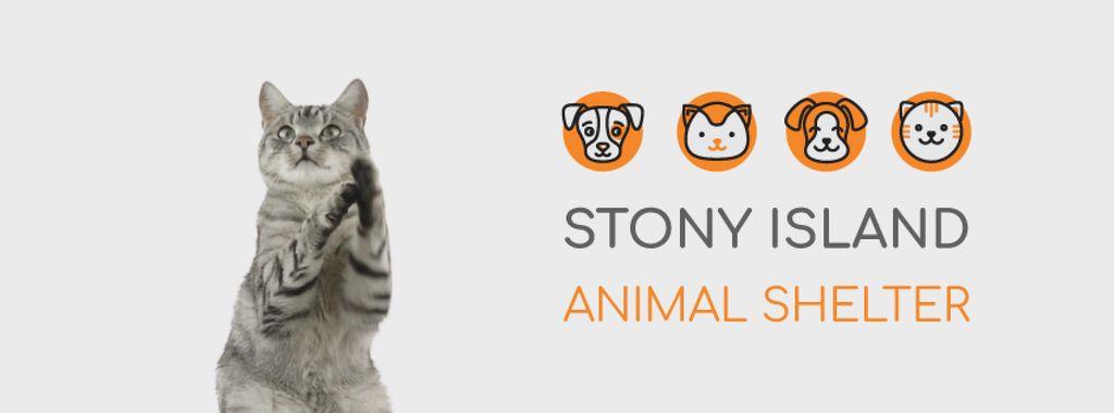 Cute grey cat playing — Create a Design