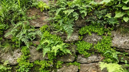 Old stones with fern greens Zoom Background Design Template