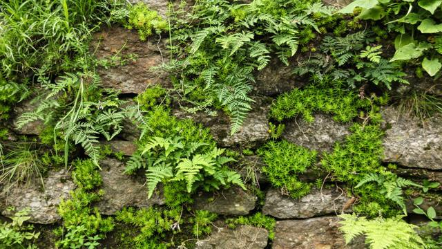 Modèle de visuel Old stones with fern greens - Zoom Background