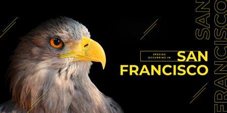 Wild eagle bird Image Design Template