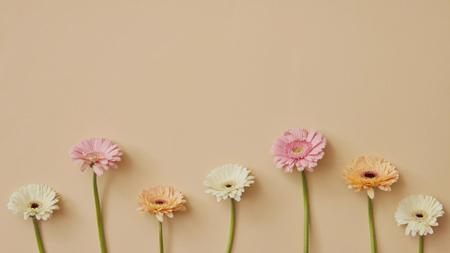 Gerbera Flowers border Zoom Background – шаблон для дизайну