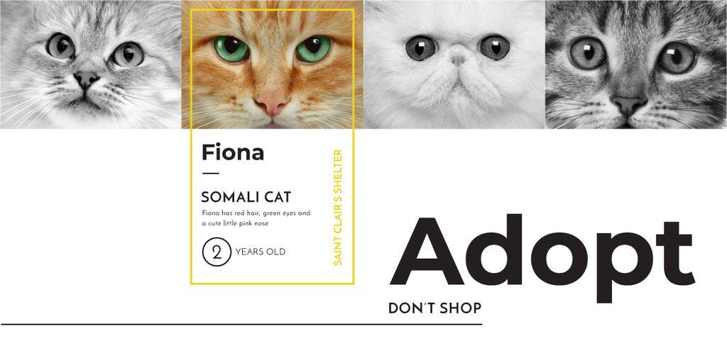 Somali cat poster — Crea un design