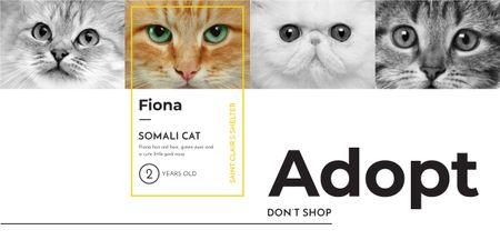 Ontwerpsjabloon van Image van Somali cat poster