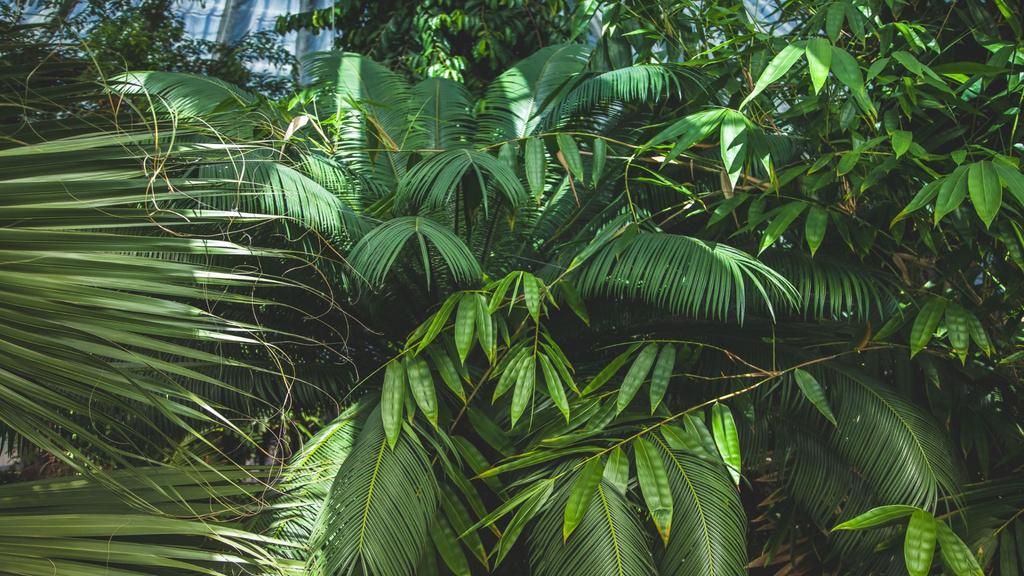 Plantilla de diseño de Green tropical Palm Forest Zoom Background