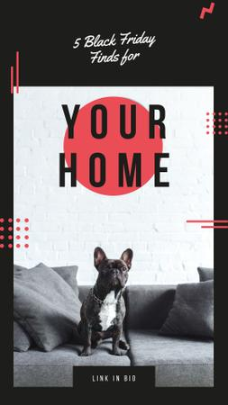 Template di design French bulldog sitting on sofa Instagram Story